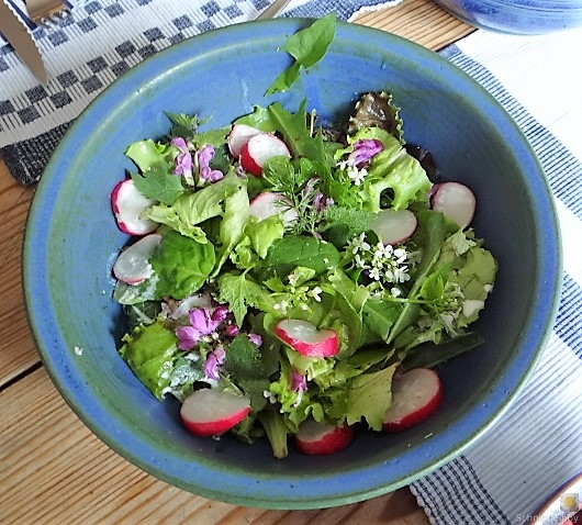 Gefüllte Paprika,Tzatziki,Bunter Salat (10)