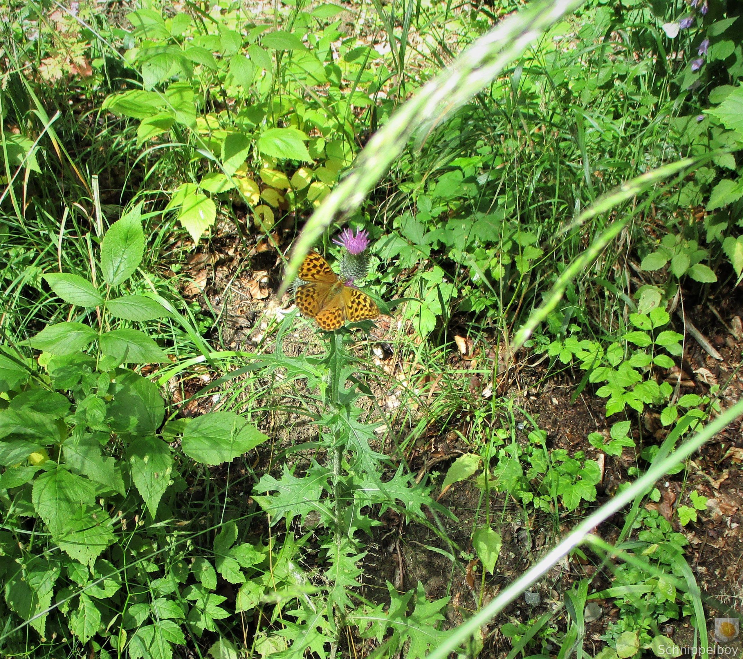 Blüten, Falter, Holz und Pilze (14)