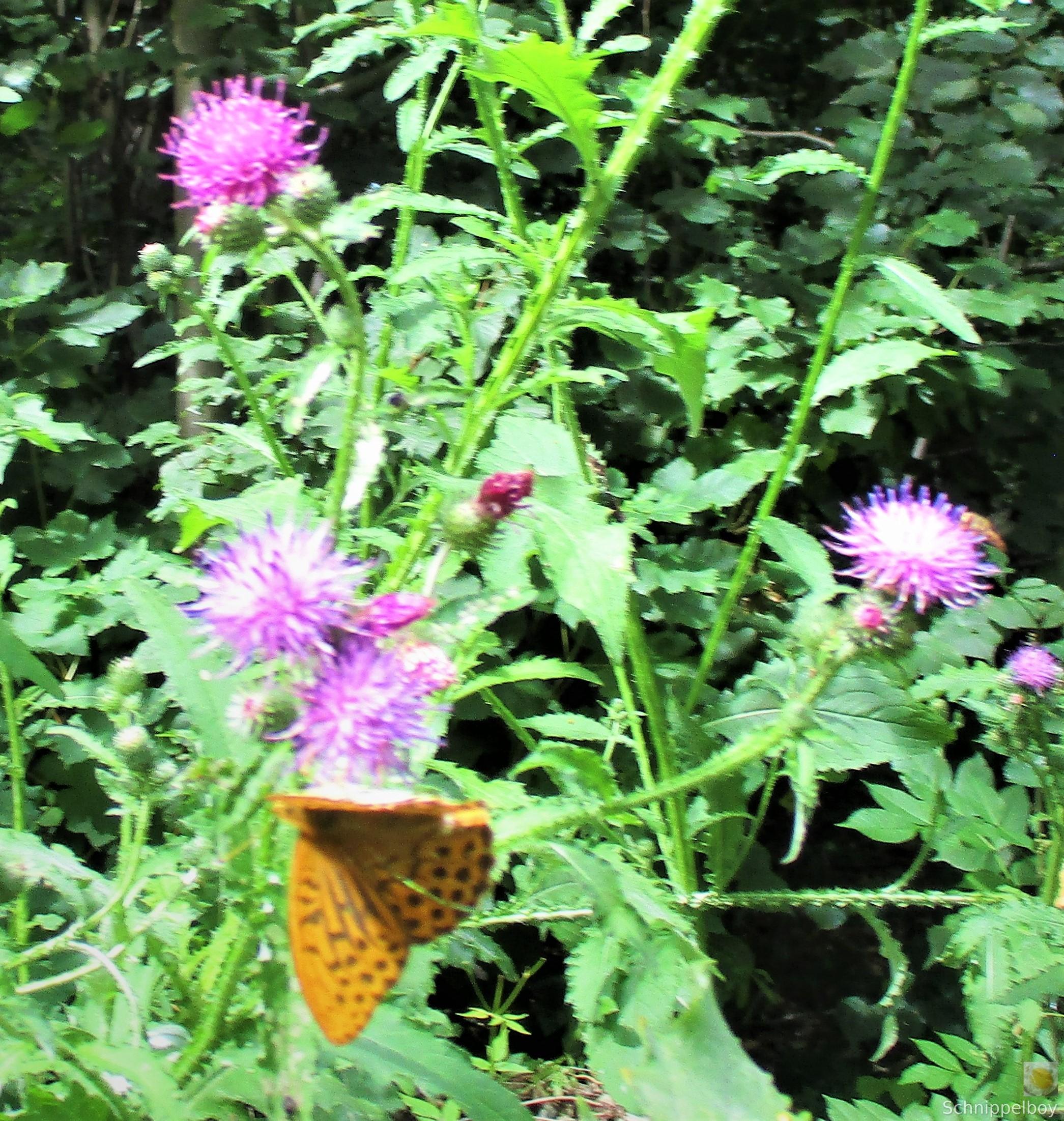 Blüten, Falter, Holz und Pilze (15)