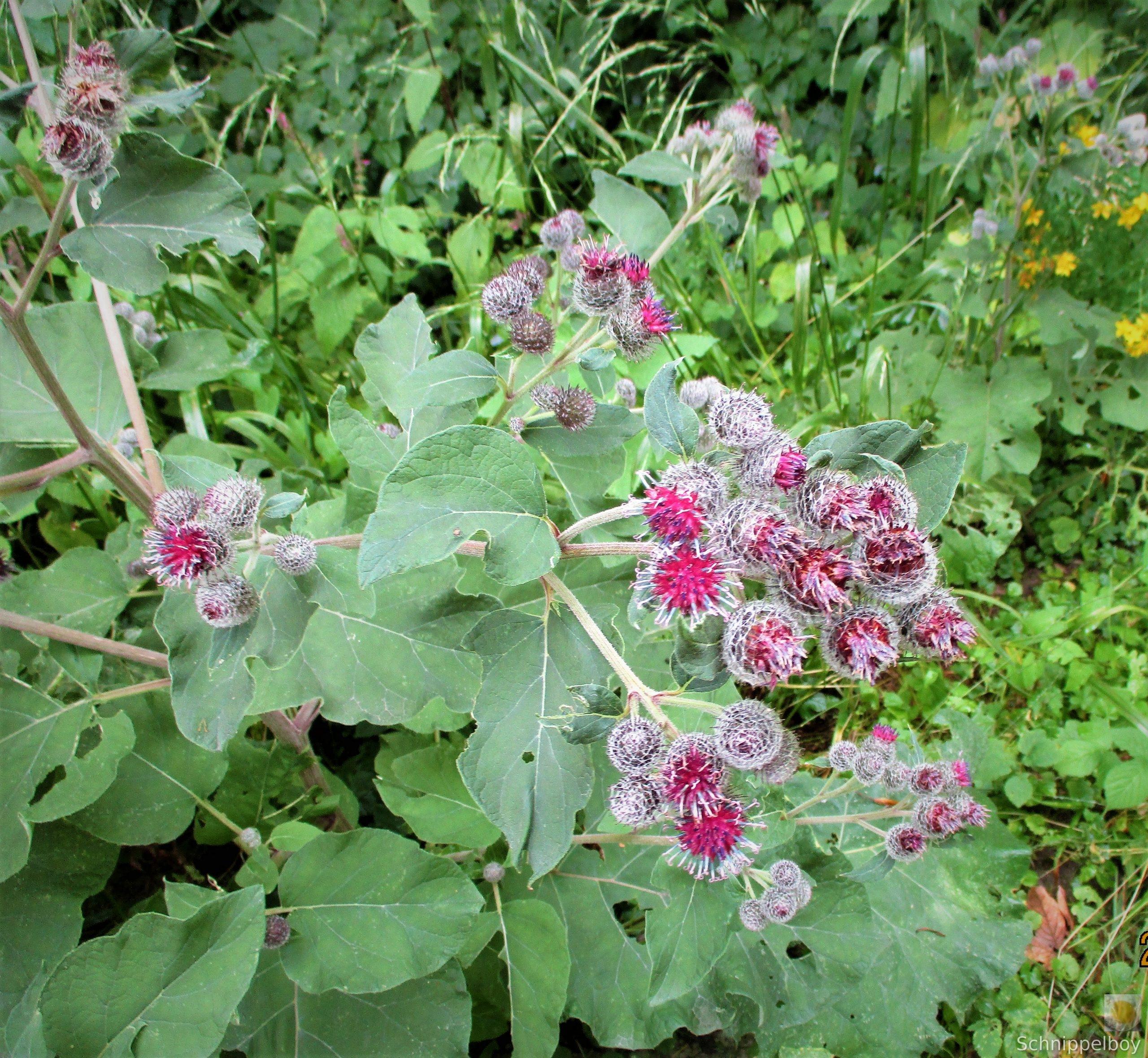 Blüten, Falter, Holz und Pilze (2)