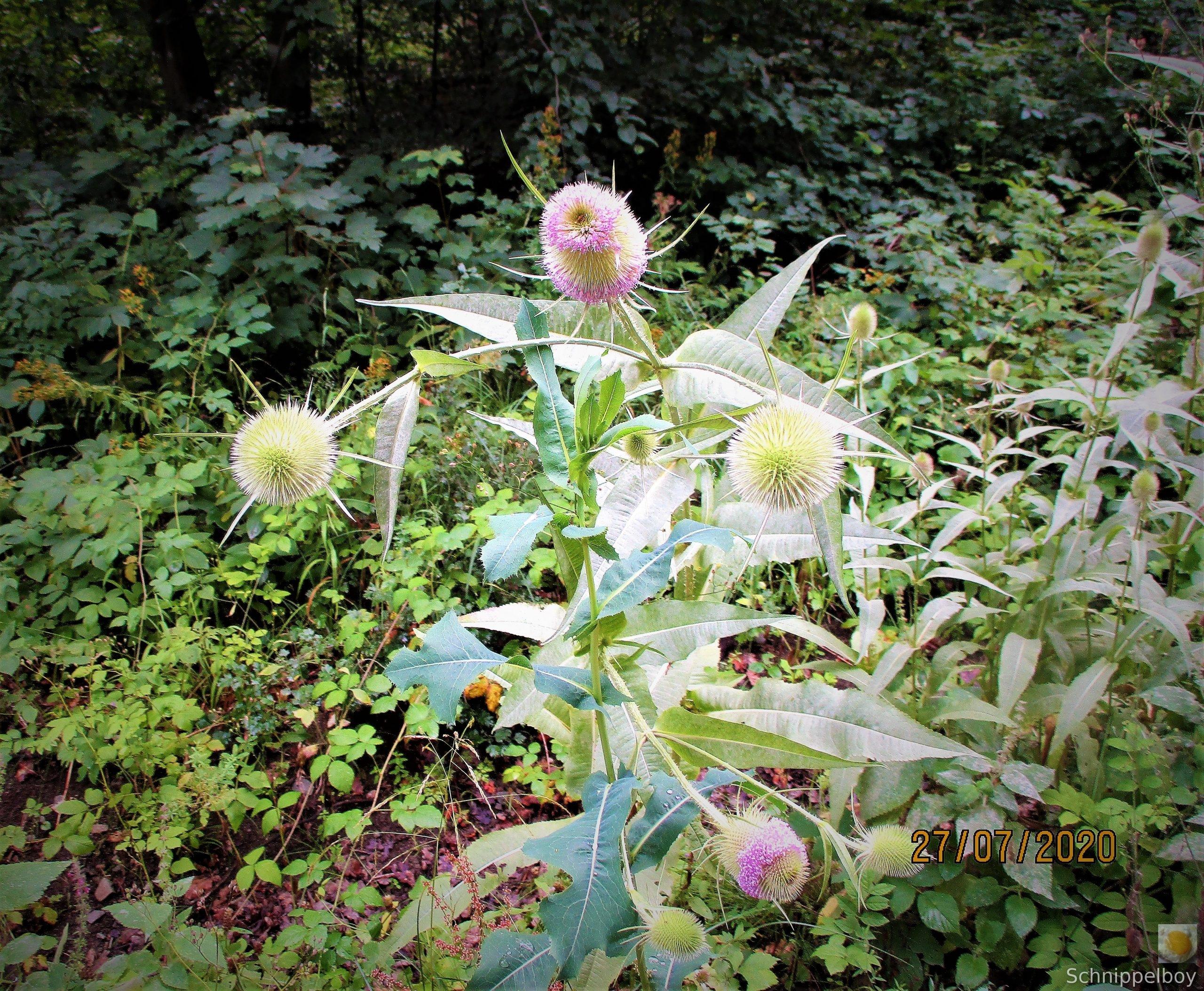 Blüten, Falter, Holz und Pilze (3)