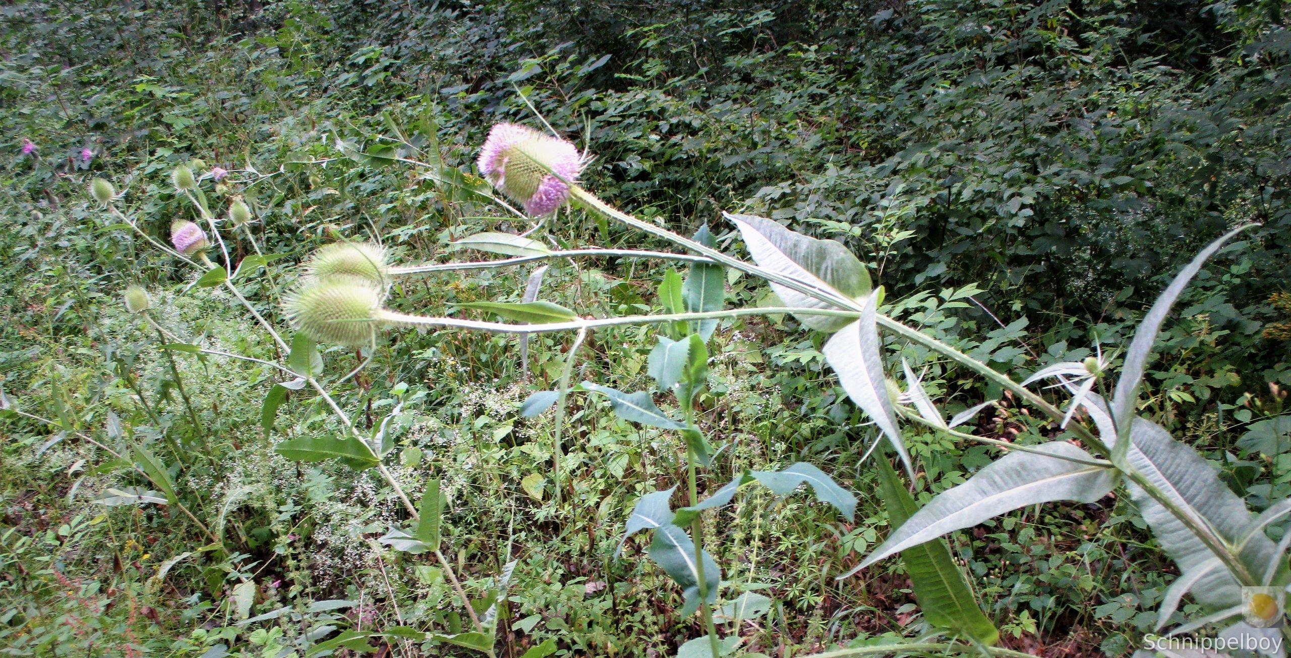 Blüten, Falter, Holz und Pilze (4)